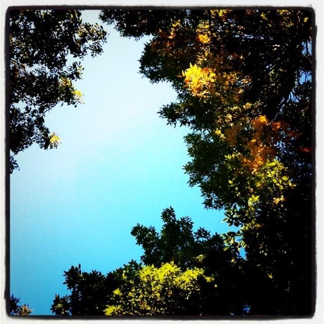 Fall Morning Fir